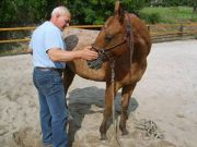 Dovolená s vlastním koněm