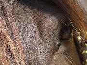 Naomi detail oko